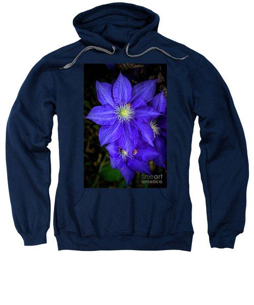 Color Me Purple Sweatshirt
