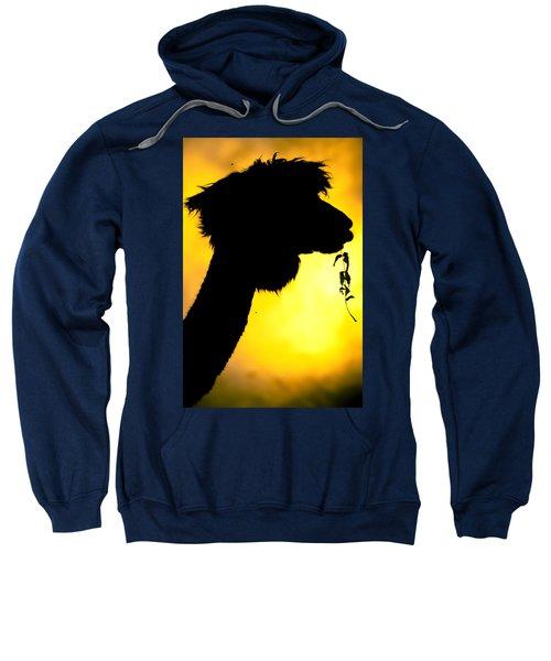 Endless Alpaca Sweatshirt by TC Morgan