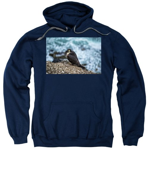 Peregrine Falcon - Here's Looking At You Sweatshirt