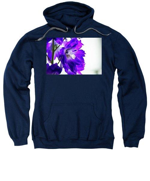 Purpled Sweatshirt