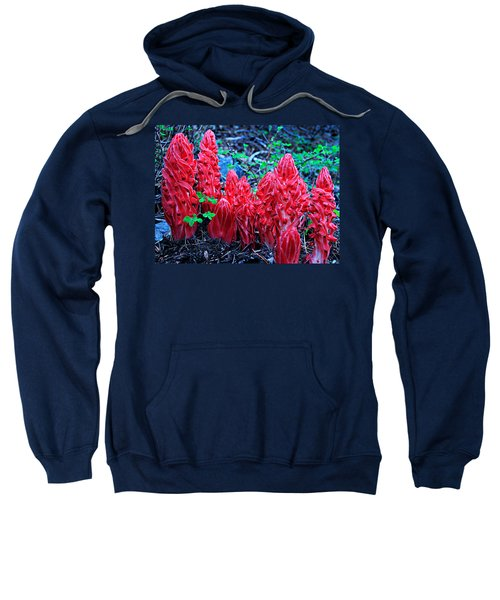 Snowflower Pow Wow Sweatshirt