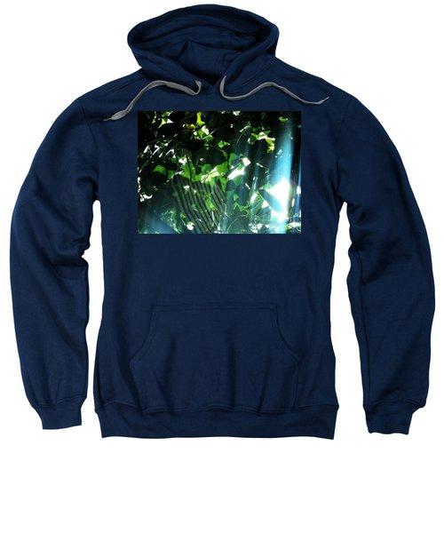 Spider Phenomena Sweatshirt