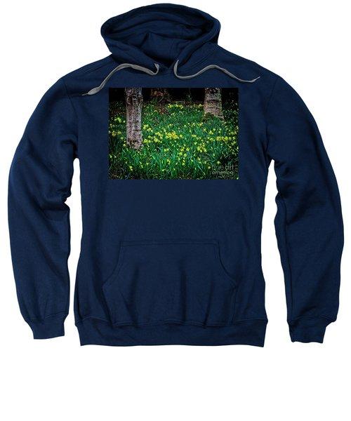 Spring Daffoldils Sweatshirt