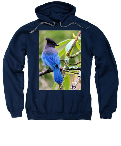 Stellar Blue Jay Sweatshirt