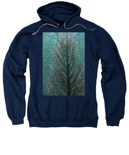 Tree In Autumn, With Red Leaves, Blue Background, Sunny Day Sweatshirt