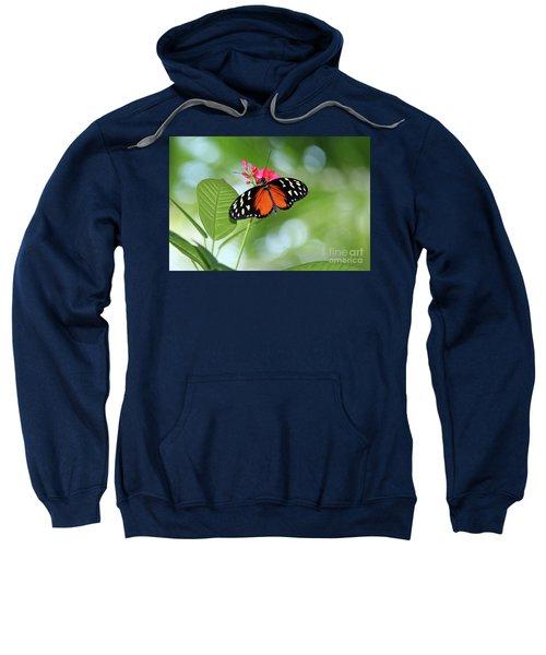 Tropical Hecale Butterfly Sweatshirt
