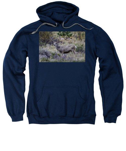 Velvet Mule  Sweatshirt