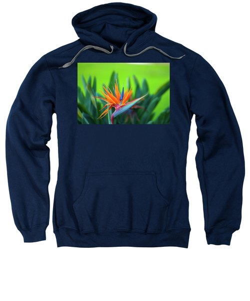 Victoria Falls Bird Of Paradise Sweatshirt