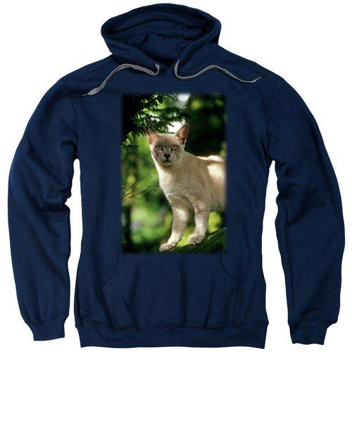 Wilham Sweatshirt by Jon Delorme