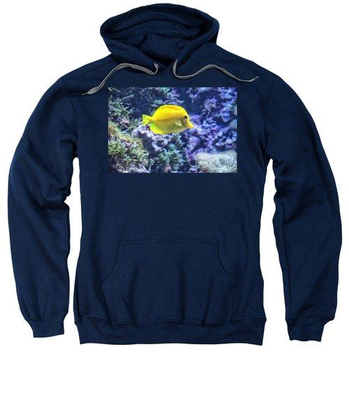 Yellow Tang Sweatshirt