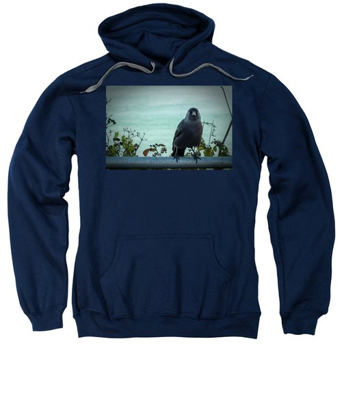 Cornish Crow Sweatshirt