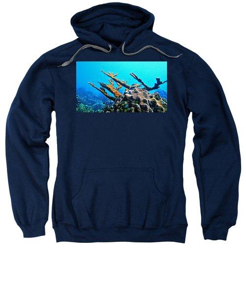 Elkhorn Sweatshirt
