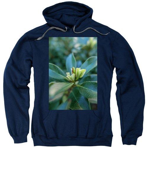 Softly Blooming Sweatshirt
