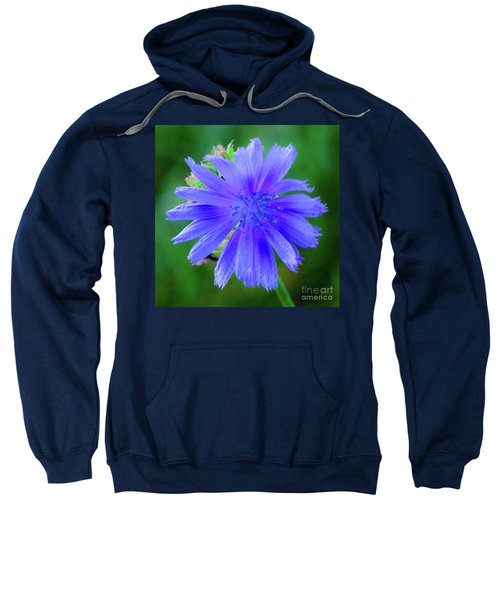 Vibrant Blue Chicory Blossom Close-up With Its Delicate Petals And Stamen Sweatshirt