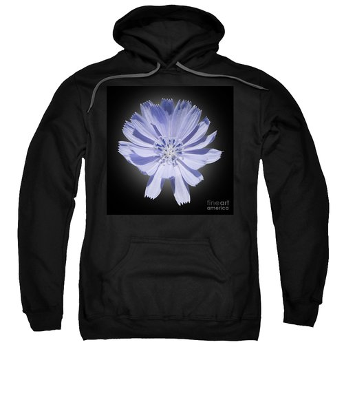 Cichorium Intybus Sweatshirt