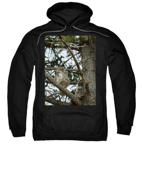 Great Horned Owls Sweatshirt