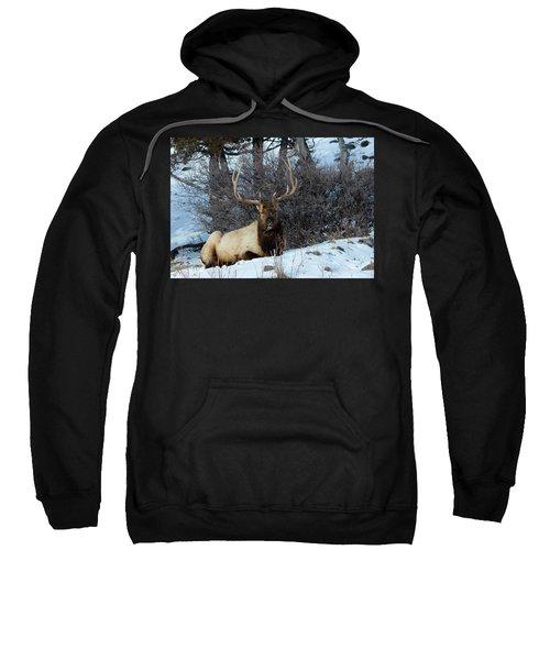 Rocky Mountain Elk Sweatshirt