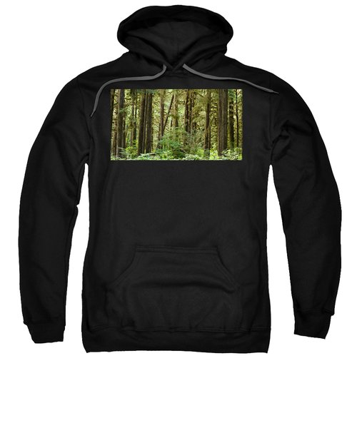 Trees In A Forest, Quinault Rainforest Sweatshirt by Panoramic Images