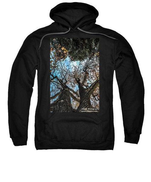 1st Tree Sweatshirt