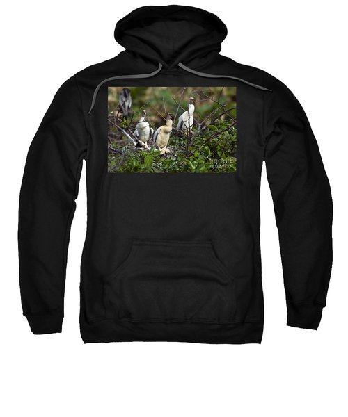 Baby Anhinga Sweatshirt by Mark Newman