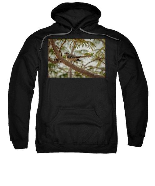 Mockingbird Sweatshirt by Robert Bales