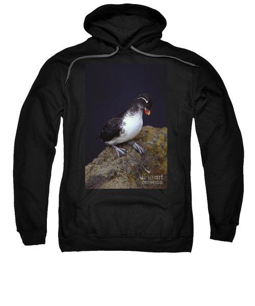 Parakeet Auklet Sweatshirt