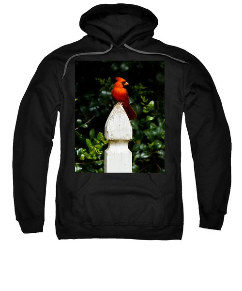 Male Cardinal Sweatshirt