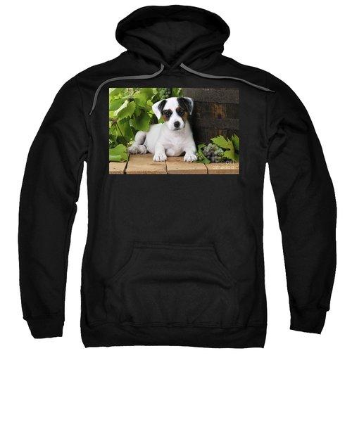 Parson Russell Terrier Puppy Sweatshirt