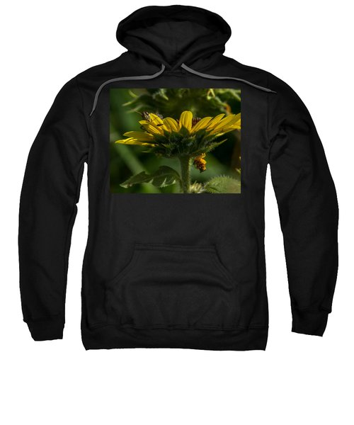 A Bugs World Sweatshirt
