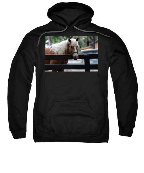 Sweatshirt featuring the photograph A Hilton Head Island Horse by Kim Pate