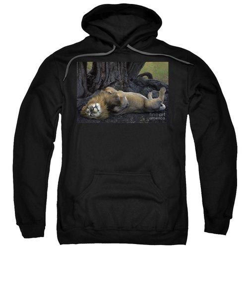 African Lion Panthera Leo Wild Kenya Sweatshirt