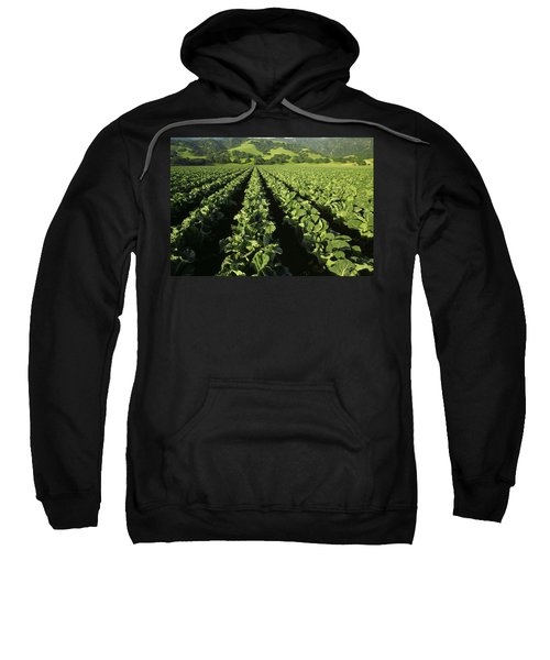 Agriculture - Mid Growth Cauliflower Sweatshirt by Ed Young