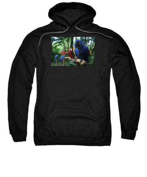 Aloha Kaua Aloha Mai No Aloha Aku Beautiful Macaw Sweatshirt by Sharon Mau