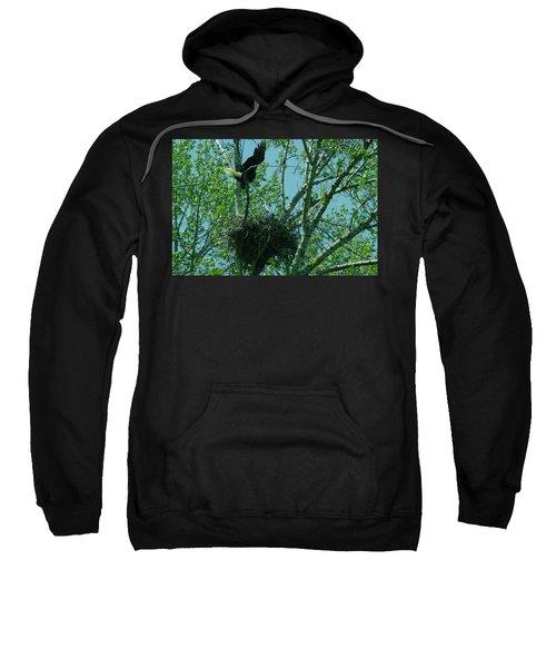 An Eagle And Eaglet Sweatshirt