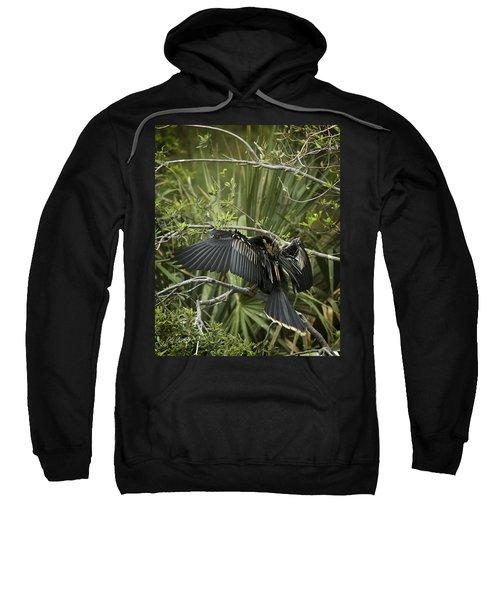 Anhinga Papa Sweatshirt by Phill Doherty