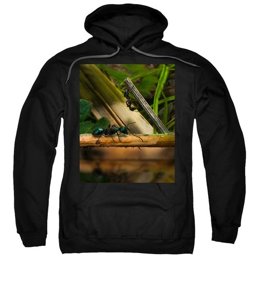 Ants Adventure 2 Sweatshirt