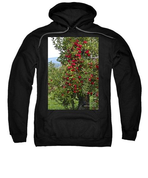 Apple Tree Sweatshirt