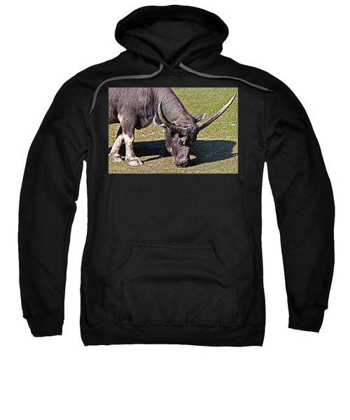 Asian Water Buffalo  Sweatshirt by Miroslava Jurcik