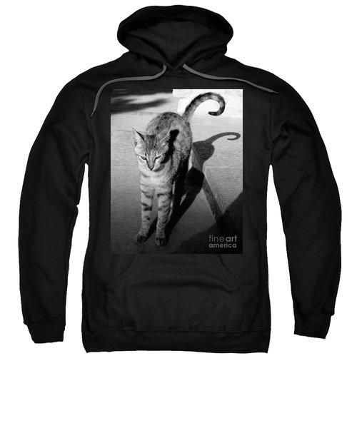 Aswan Cat Sweatshirt