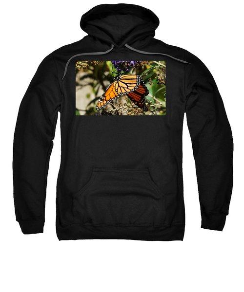 Autumn Butterfly Sweatshirt