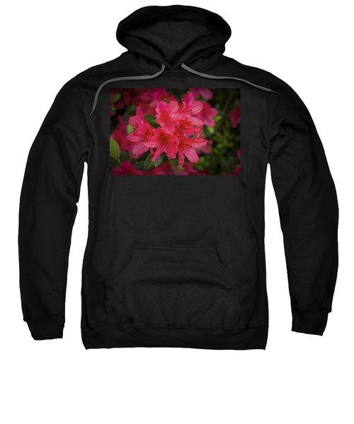 Azaleas 1 Sweatshirt