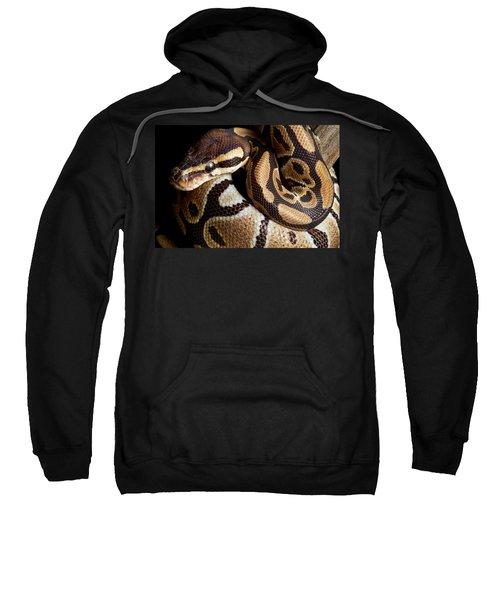 Ball Python Python Regius Sweatshirt