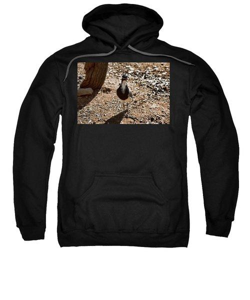 Banded Lapwing Sweatshirt