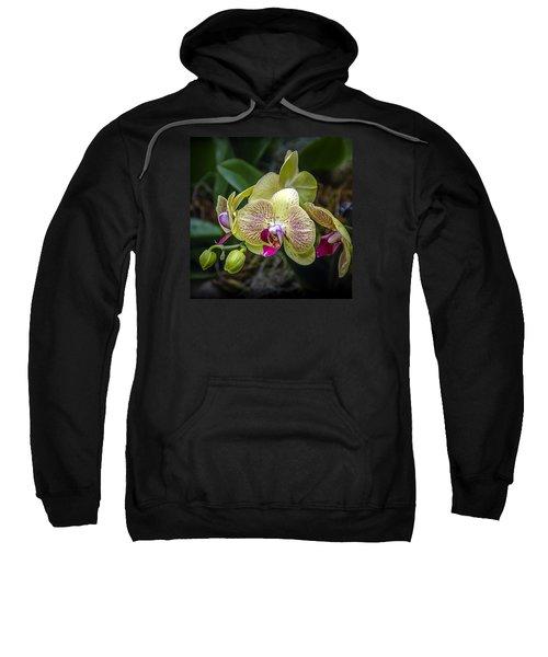 Beauty Of Orchids 3 Sweatshirt
