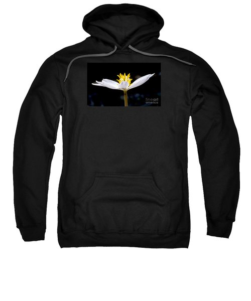 Bloodroot 1 Sweatshirt