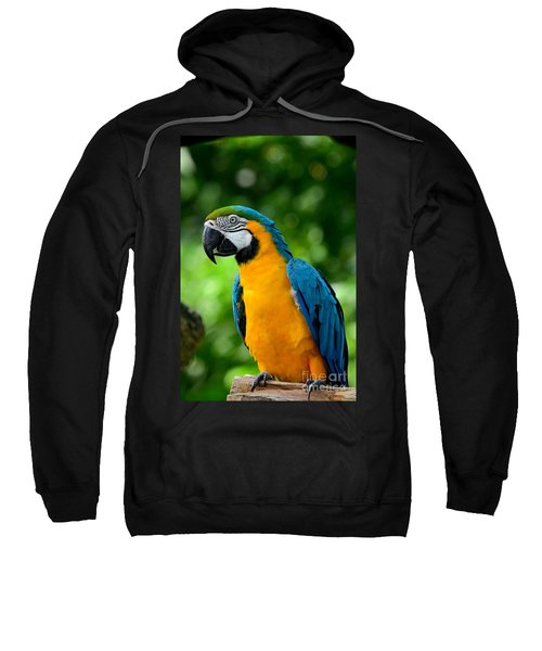 Blue And Yellow Gold Macaw Parrot Sweatshirt