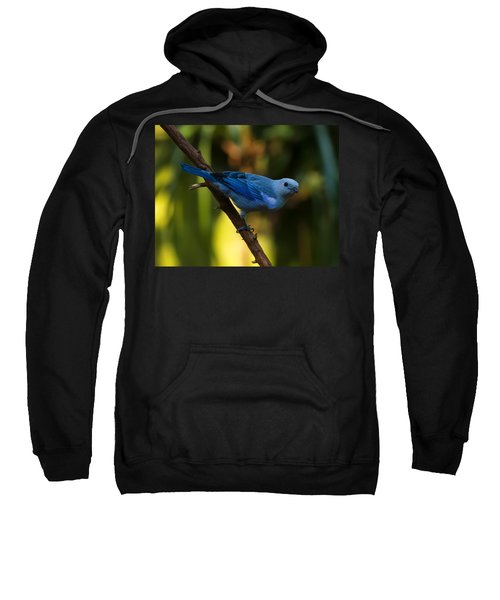 Blue Grey Tanager Sweatshirt