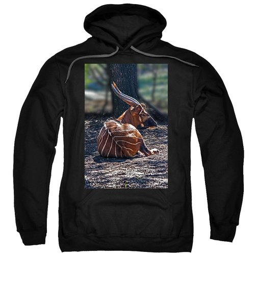 Bongo Sweatshirt