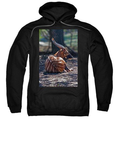 Bongo Sweatshirt by Miroslava Jurcik