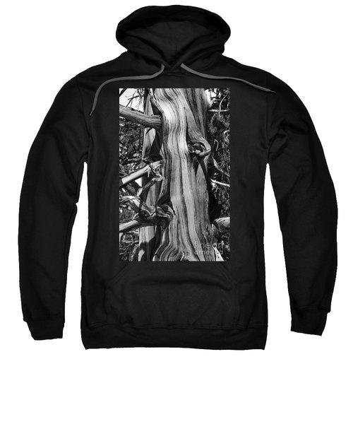 Sweatshirt featuring the photograph Bristle-cone Pine-2 by Mae Wertz